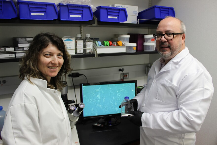 Curtis Creech and his research mentor Katerina Stujkova investigate cell constructs in a lab at UTSA.