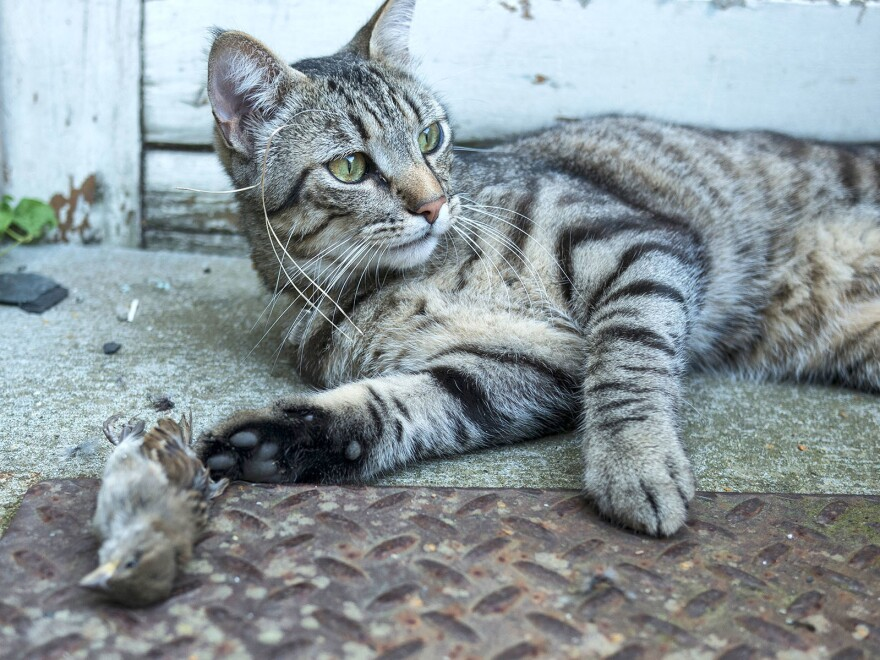 Cats who roam outdoors tend to stick close to home, having a big impact on local wildlife.