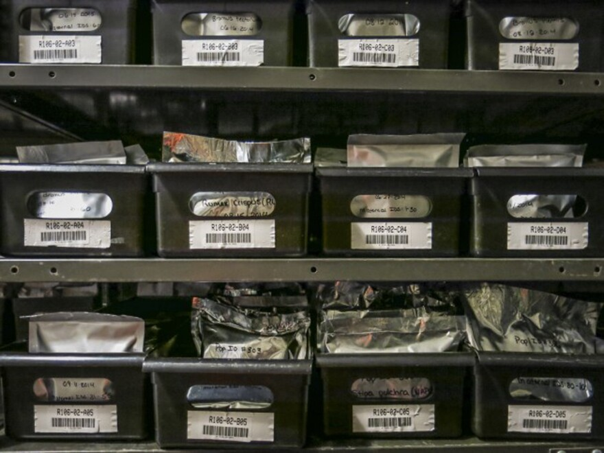 Seed collections from the Project Baseline collection. The effort has more than 60 species — millions of seeds that scientists have gathered from across the country for research in the coming decades. (Grace Hood/CPR News)
