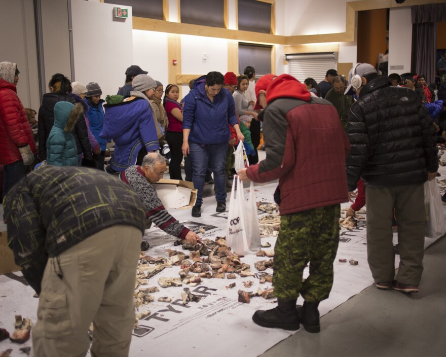 Residents of Arctic Bay gather in the Community Hall for a feast of narwhal muktuq — that's the layer of skin and fat that's high in vitamin C. All are welcome to come with grocery bags and take what they need for their families.