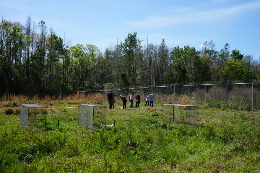 In this photo from March 2019, USF students and FBI agents in the background look at a pair of bodies at the Pasco facility. In the foreground, cadavers that are normally protected from predators like vultures by cages that were opened for the field day.