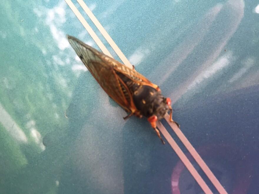 cicadas_2.jpg