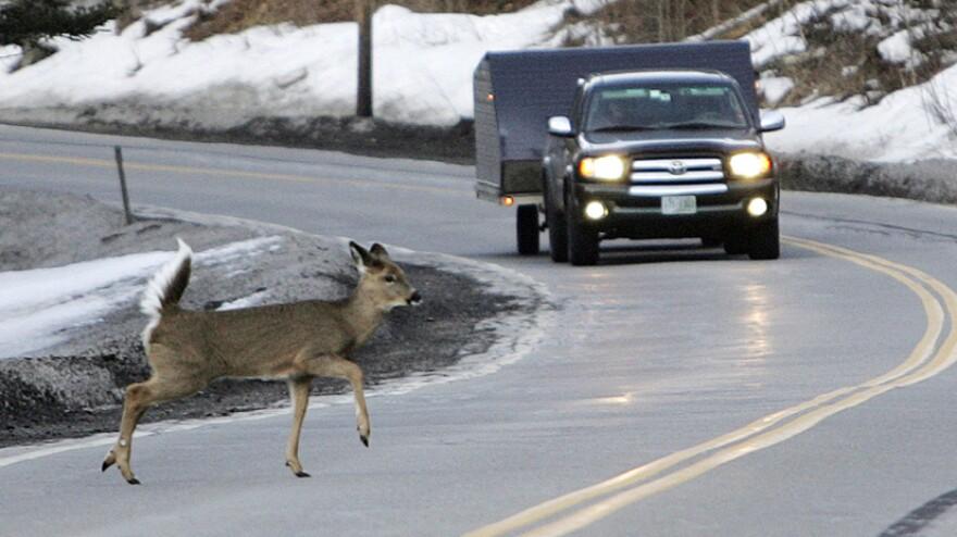 <p>Last March: A deer runs across the road in Pittsburg, N.H. </p>