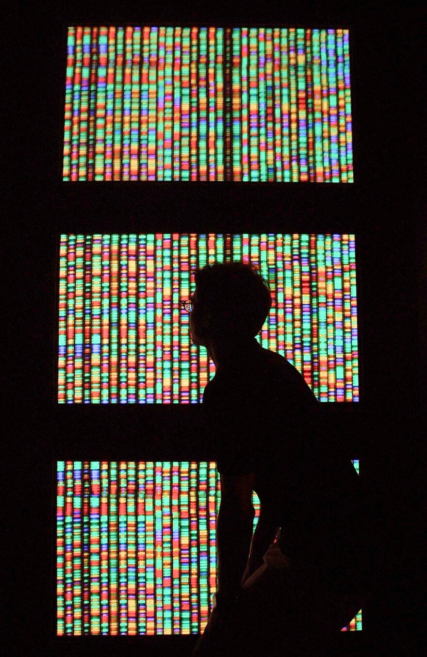 A visitor views a digital representation of the human genome at the American Museum of Natural History in New York.
