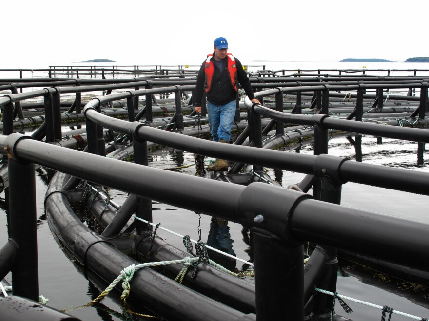 Lenny Totten of Cooke Aquaculture examines a circular raft that holds up hundreds of heavy strings of mussels, which are cultivated for human consumption.