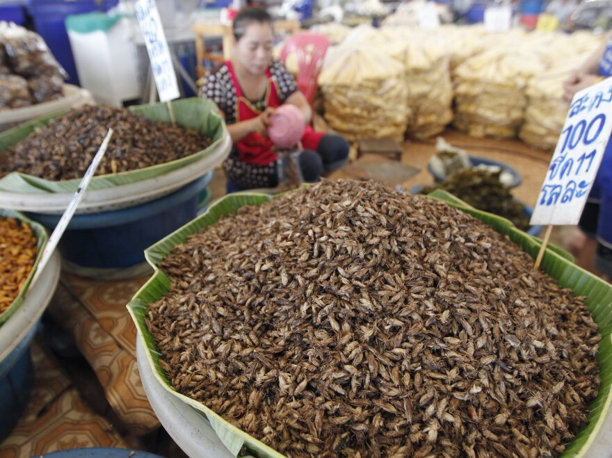A vendor sells edible insects at Talad Thai market on the outskirts of Bangkok. The most popular method of preparation is to deep-fry crickets in oil and then sprinkle them with lemongrass slivers and chilis.