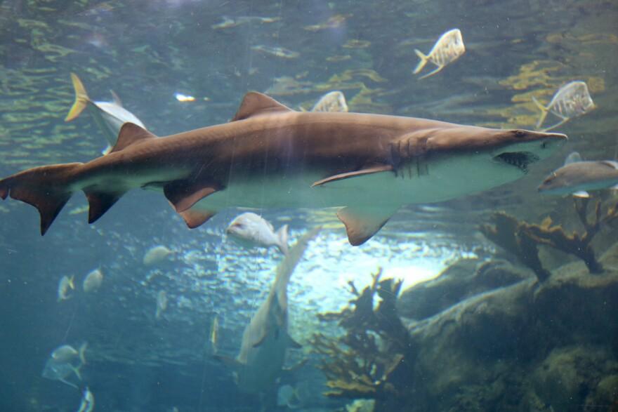 shark_week1.jpg