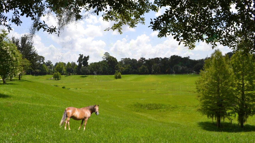 Horse on a farm field