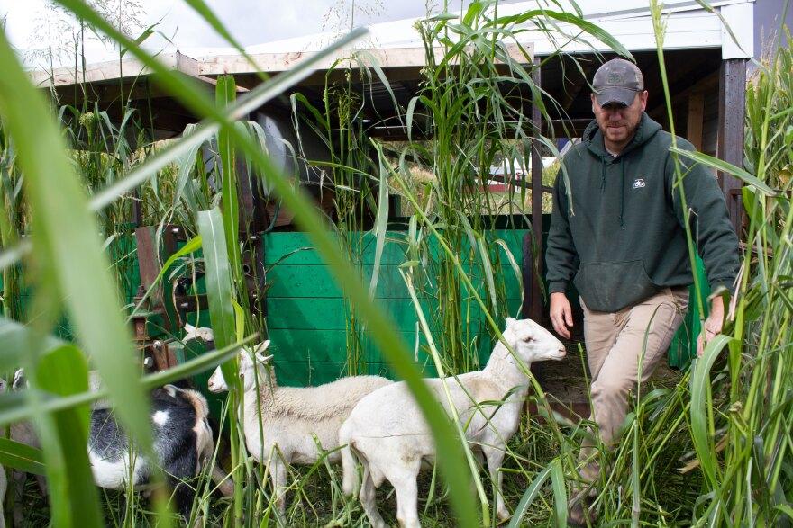 092820-am-ZackSmith-sheep+goats