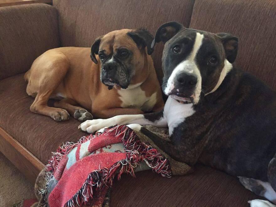 stu_s_dogs_better_pic.jpg