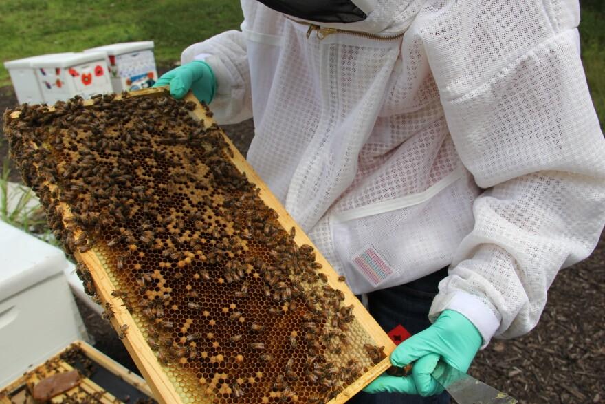 Merav Gleit, Monsanto's bee health platform lead, with the company's backyard bee hives in summer 2016.