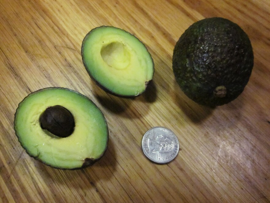 This season's avocados are the smallest in memory. We found some that were as tiny as 47 grams.