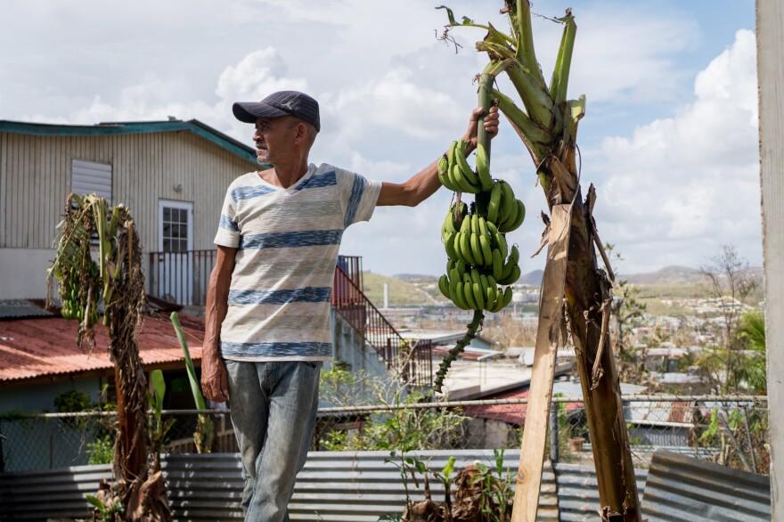 Angel Ramos hangs on to a banana plant in his neighbor's backyard.