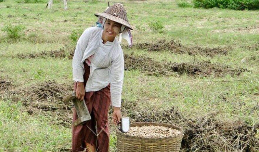 IIRC Woman in fields.jpg