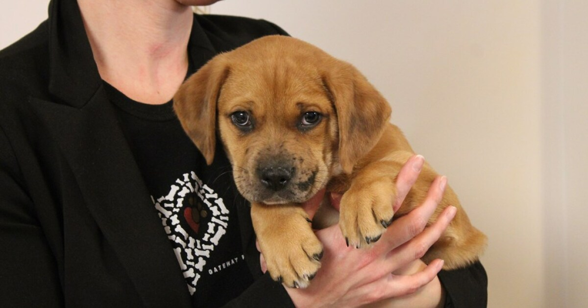 Metro East Animal Welfare Organization Adds Services For People