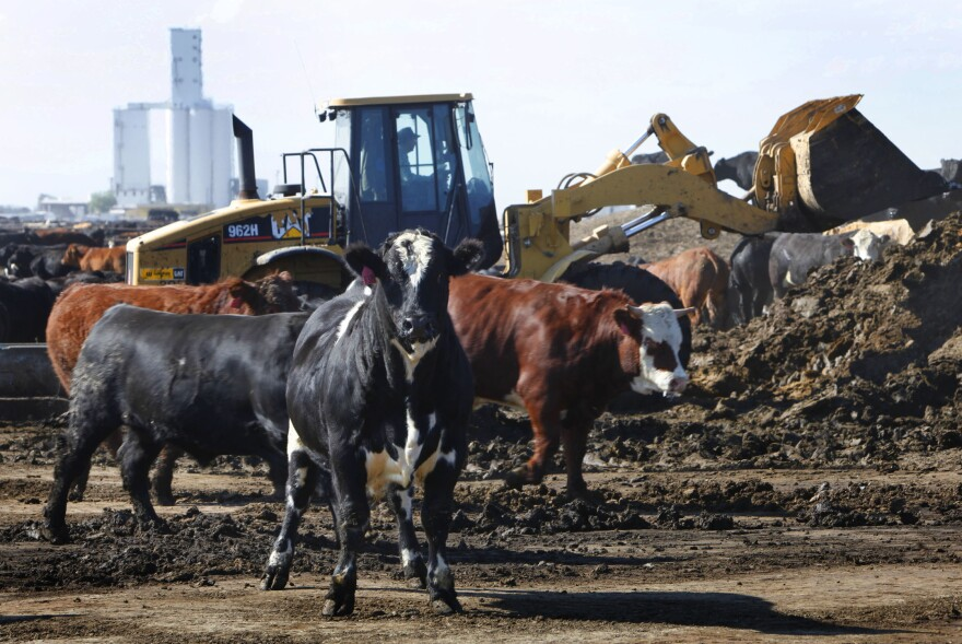 A front-end loader piles up manure as a pen is cleaned out at the JBS feed lot west of Greeley, Colo., in 2009. JBS is taking action to reduce the smell from its facilities.