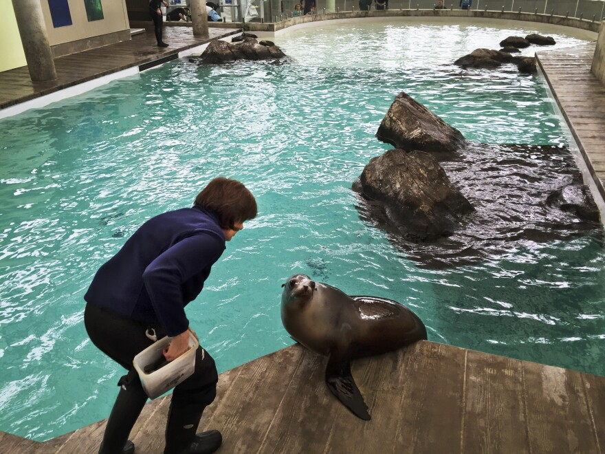 Kathy Streeter has been working with marine mammals since 1973.