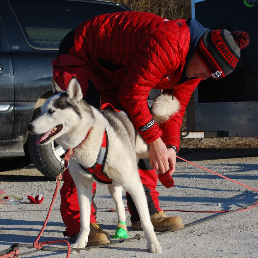 Musher Richie Camden puts booties on Mikko. Depending on how they run, some of the dogs need the protective covers for their paws, Camden said. On the Katy Trail in January 2017.