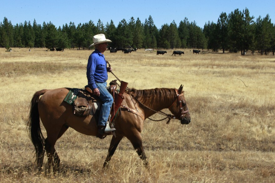 Rancher Denny Johnson looks over his cattle in Joseph, Ore., in 2011. Conservationists say ranchers raising beef cattle are responsible for the decline of some wildlife.