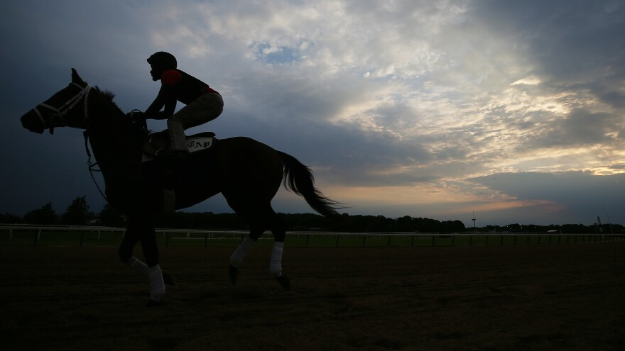 A horse and exercise rider train on the track during a morning workout prior to the Belmont Stakes this weekend.
