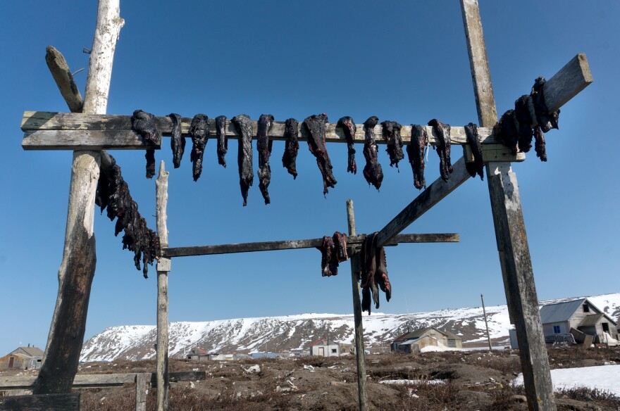 Walrus, shown here on a drying rack, represents a major source of nutritious food for many in Alaska's St. Lawrence Island. In recent years, warmer temperatures have pushed the sea ice farther from St. Lawrence's shores, making walrus hunting more challenging. This shortfall has led to increased food insecurity on the island.