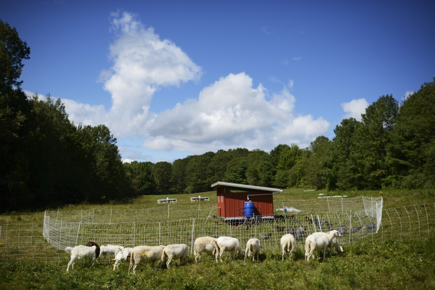 """Marya Gelvosa and Josh Gerritsen run a small farm on Maine's rocky mid-coast, providing their local community with beef, lamb and heritage poultry. They're decades younger than the average American farmer, but they love the lifestyle. """"It's very fulfilling work,"""" Gelvosa says."""