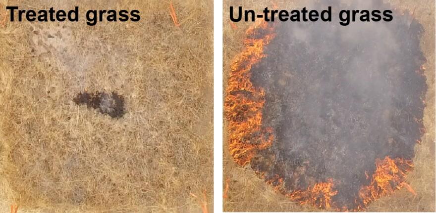 grass_experiment_fire_gel.jpg