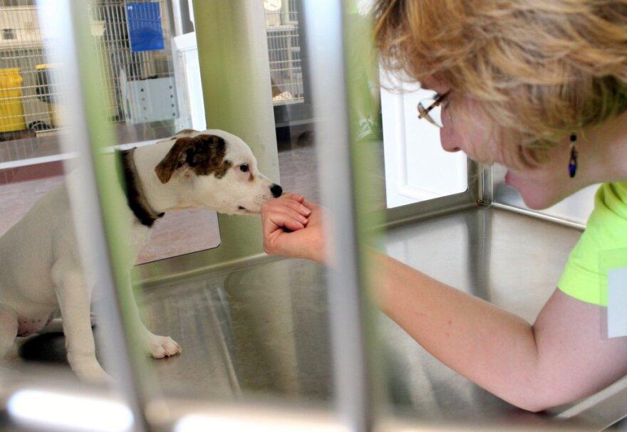 Animal Center Pooch.JPG