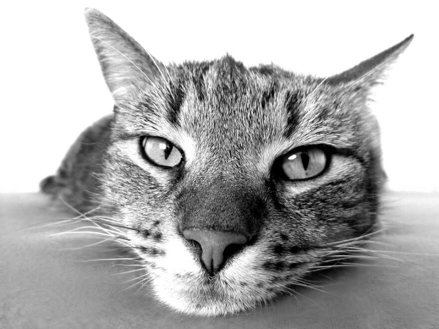 Cat Lounging BW.jpg