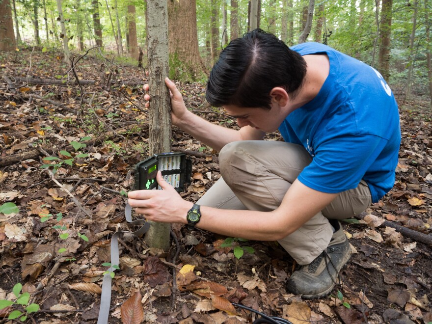 """We are team science,"" says Dan Herrera, a field technician with the D.C. Cat Count. Camera traps like this one are strapped to trees and motion-activated."