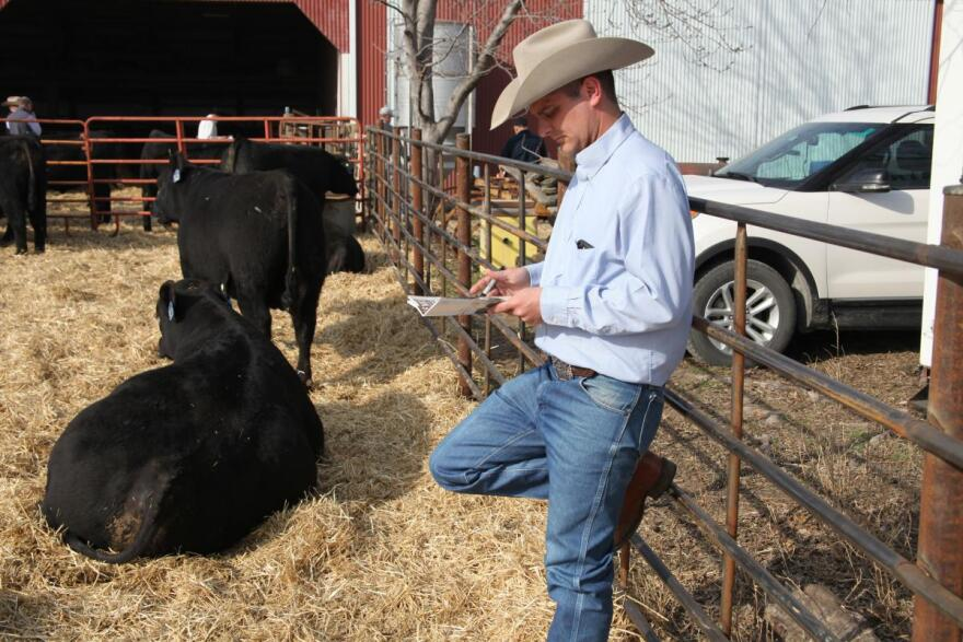 Cattle sales consultant Wes Tiemann reviews the catalog for an Angus auction on March 15 at Henke Farms in Salisbury, Missouri. Each animal in the auction is DNA tested.
