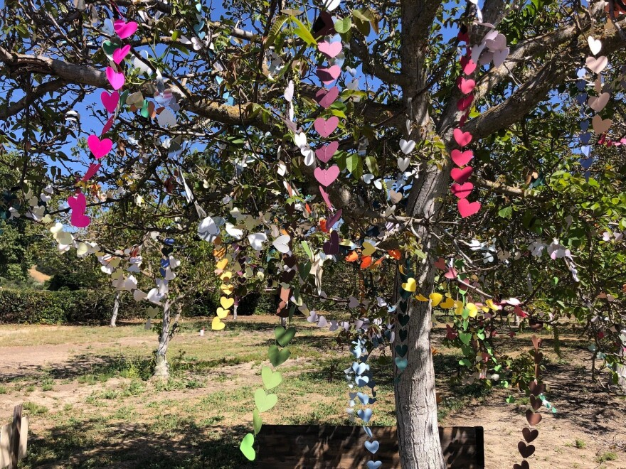 Anne Guynn has draped garlands of more than 3,600 paper hearts on a walnut tree in her family orchard, Ballard Walnut Grove, in Ballard, Calif. Each heart represents one California resident who has died from COVID-19.