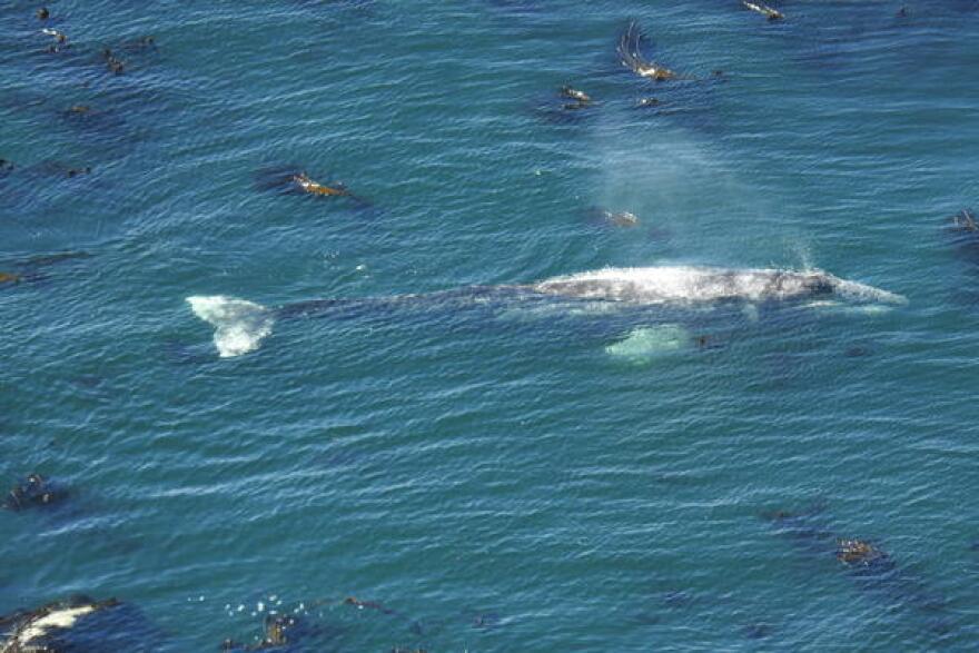 drone_whale.JPG
