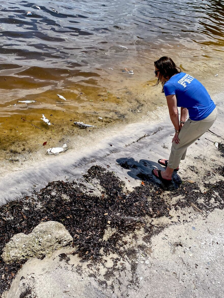 Agriculture Secretary Nikki Fried inspects dead fish