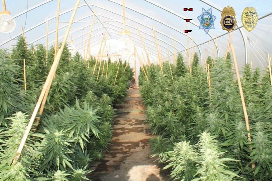 marijuana_121014_t1200.jpg