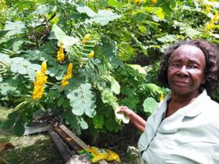 Cacheta Francis poses next to her King of the Forest shrub, one of many traditional Jamaican plants she uses for bush medicine.