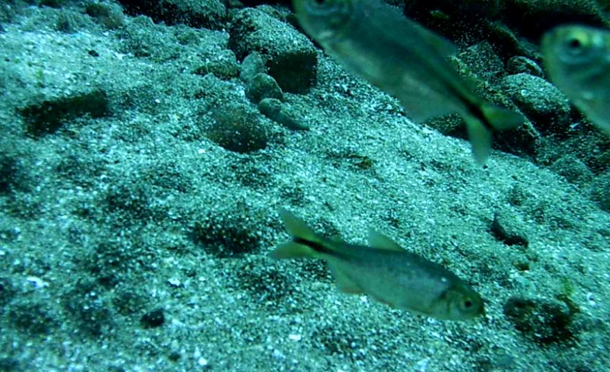 underwater_springs.png