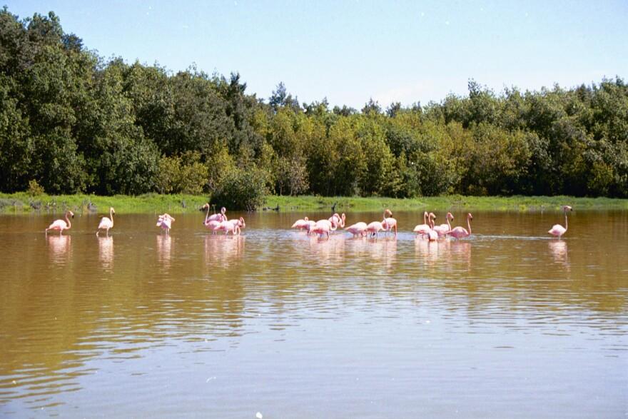 flamingos_mud_key_pete_frezza.jpg