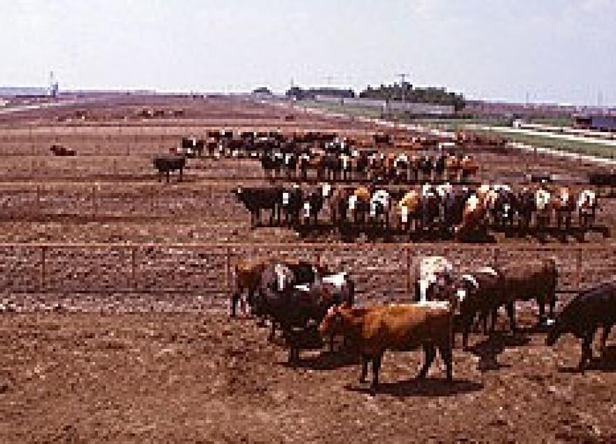 feedlot USDA by John Nienaber.jpg