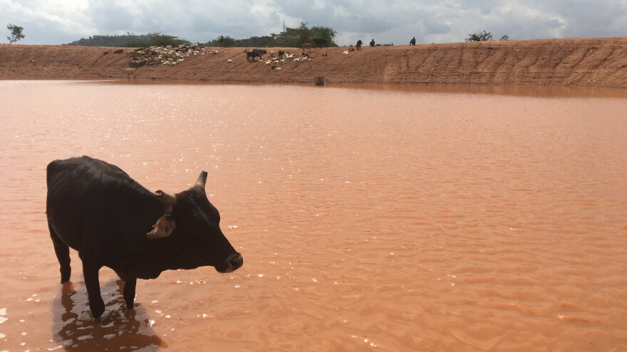 As the drought has extended into yet another rainy season, some herders walk for hours to get to this dam.