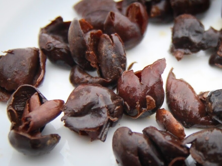 A closeup of coffee cherries used to brew cascara.