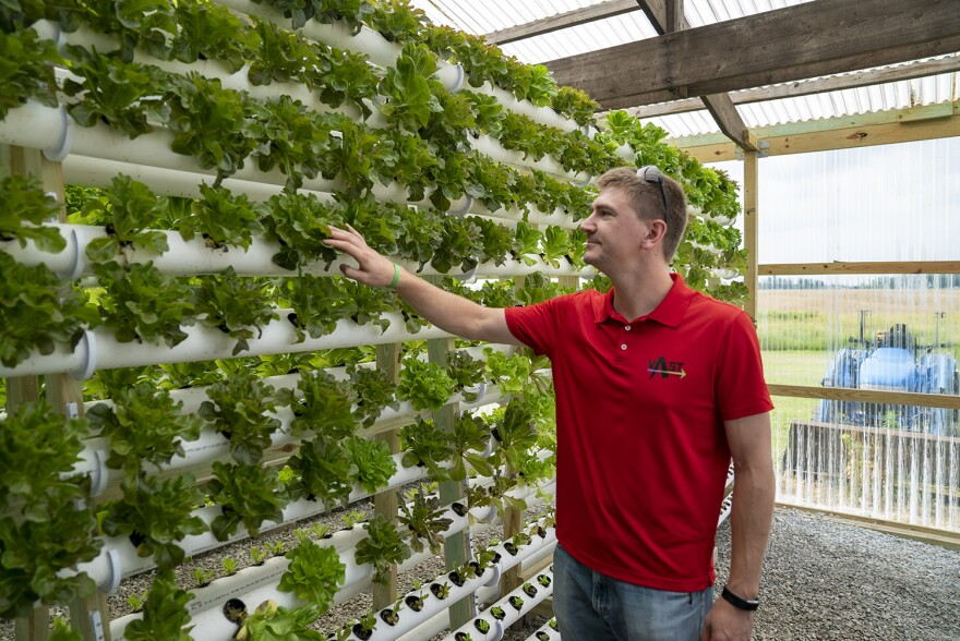 Andrew Mueth tends to a head of lettuce in VAST Produce's greenhouse in Waterloo on June 26. VAST won the 2018 Metro East Start-Up Challenge.