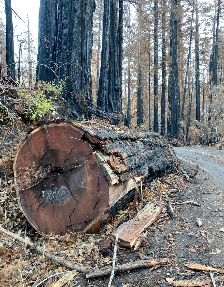 "Logging crews at Big Basin are busy removing ""hazard trees,"" including parts of giant redwoods and other tree species that fell or are at risk of falling on to park roadways after the wildfire. The camping and hiking meccas will likely remain closed for a year or longer."