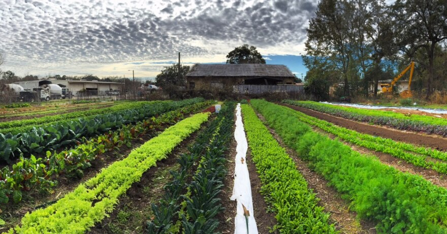 Ripe City Urban Farm lost all but one of its restaurant clients. Now, owner Sarah Bardolph says the farm's primary income comes from the Red Hill Online Farmers Market.