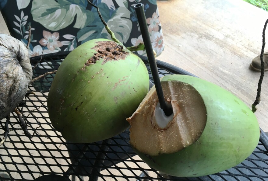 green_coconuts_are_the_best_source_for_fresh_coconut_water..jpg