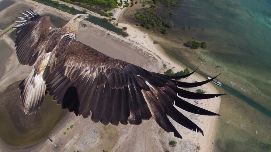 An eagle flies over Bali's Barat National Park, in this award-winning image taken by a camera attached to a drone.