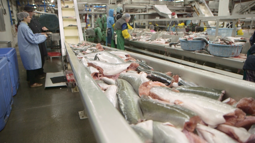 Seafood processors like Ocean Beauty are some of the largest energy consumers in Kodiak, Alaska, which has generated more than 99 percent of its electricity from renewable sources since 2014. Here, the Ocean Beauty seafood plant.