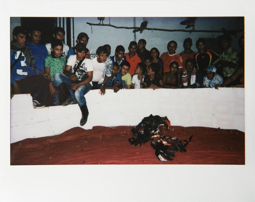 Men watch a cockfight on a Friday night in Zabaleta.