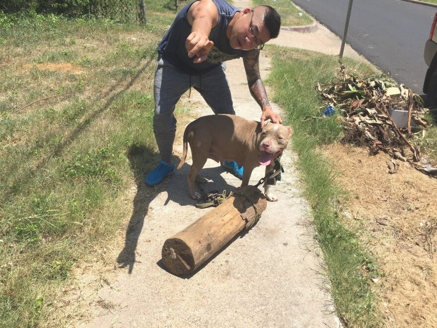 Photo of a animal rescue volunteer helping a female dog who'd been chained to a log and had recently given birth.