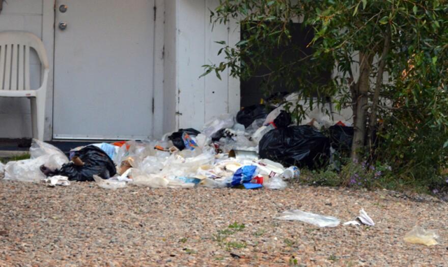 trash-bears-tim-nicholson.jpg
